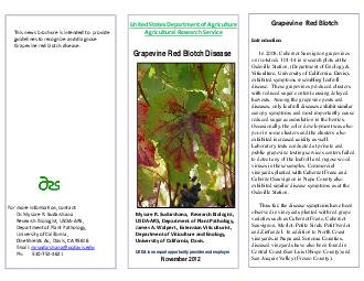Introduction Grapevine Red Blotch Disease Introduction In  Cabernet Sauvignon grapevines on rootstock  in research plots at the Oakville Station Department of Enology  Viticulture University of Calif