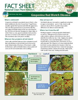 What is red blotch Grapevine red blotchassociated virus GRBaV is the latest addition to the list of more than  grafttrans missible agents that have been identi ed in grapevines PowerPoint PPT Presentation