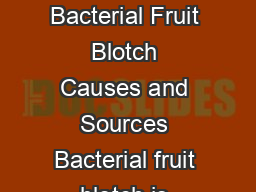 Bacterial Fruit Blotch A COMMERCIAL GROWERS GUIDE  Bacterial Fruit Blotch Causes and Sources Bacterial fruit blotch is caused by the bacterium Acidovorax avenae subsp