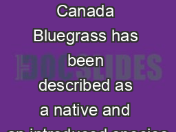 Description Canada Bluegrass has been described as a native and an introduced species