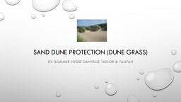 Sand dune protection (DUNE GRASS) PowerPoint PPT Presentation