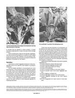 Division of Agricultural Sciences and Natural Resources  Oklahoma State University HLA Oklahoma Cooperative Extension Fact Sheets are also available on our website at httposufacts