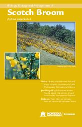 Biology Ecology and Management of Scotch Broom Cytisus scoparius L