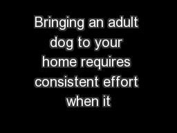 Bringing an adult dog to your home requires consistent effort when it