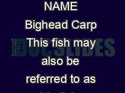 BIGHEAD CARP COMMON NAME Bighead Carp This fish may also be referred to as noble fish sp eckled amur or lake fish
