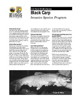 US Fish  Wildlife Service Black Carp Invasive Species Program What are black carp The black carp Mylopharyngodon piceus is a fish that inhabits large river and lake habitats and is native to most Pac
