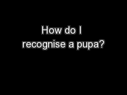 How do I recognise a pupa? PowerPoint PPT Presentation