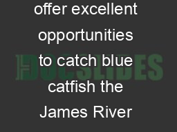 Tidal River Blue Catfish While several of Virginias tidal rivers offer excellent opportunities to catch blue catfish the James River is recognized nationally fo r its trophy blue catfish fishery