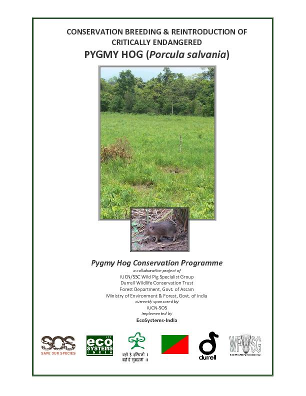 CONSERVATION BREEDING & REINTRODUCTION OF  CRITICALLY ENDANGERED  PYGM