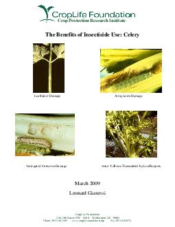 The Benefits of Insecticide Use Celery March  Leonard Gianessi Variegated Cutworm Damage Armyworm Damage Leafminer Damage Aster Yellows Transmitted by Leafhoppers Crop Protection Research Institute C