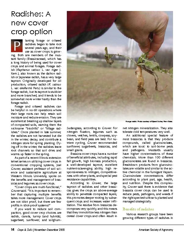 American Society of AgronomyRadishes: A new cover crop option lanting