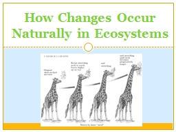 How Changes Occur Naturally in Ecosystems PowerPoint PPT Presentation