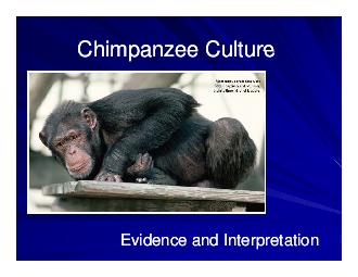 Chimpanzee Culture Chimpanzee Culture Chimpanzee Culture Chimpanzee Culture Evidence and Interpretation Evidence and Interpretation  Grou s studied in the comparative analysis of chimpanzee chimpanze