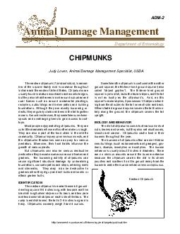 ADM Animal Damage Management Department of Entomology CHIPMUNKS Judy Loven Animal Damage Management Specialist USDA The eastern chipmunk  Tamias striatus  is a mem ber of the squirrel family and is c