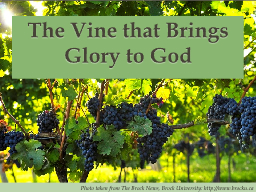 The Vine that Brings Glory to God