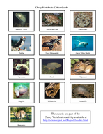 Classy Vertebrate Critter Cards Red Fox Bald Eagle Polar Bear Spiny Anteater Hippopotamus Green Tree Frog Komodo Dragon Duckbill Platypus Koala Cardinal Chimpanzee Lamprey Sea Turtle Blue Whale Sting PowerPoint PPT Presentation