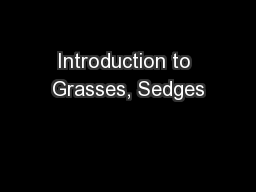 Introduction to Grasses, Sedges