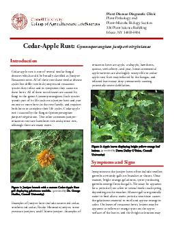 Cedar-Apple Rust: Gymnosporangium juniperi-virginianaeCedar-apple rust