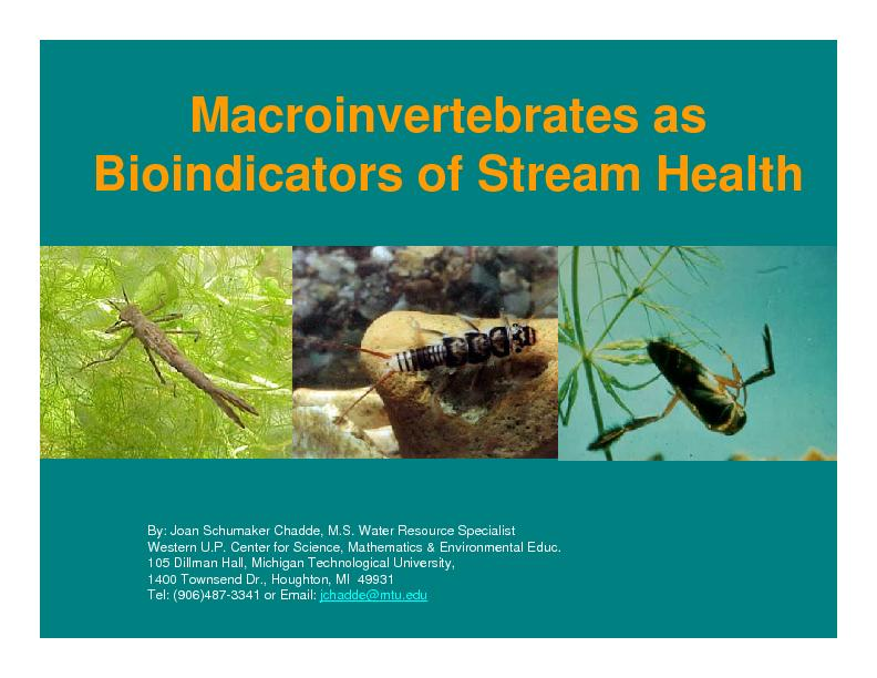 Macroinvertebratesas Bioindicatorsof Stream HealthBy: Joan SchumakerCh PowerPoint PPT Presentation