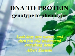 DNA TO PROTEIN