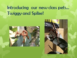 Introducing our new class pets…