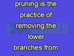 Conifer Pruning Conifer pruning is the practice of removing the lower branches from live green conifer trees PowerPoint PPT Presentation
