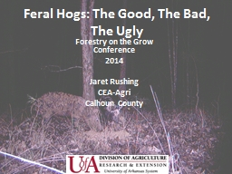 Feral Hogs: The Good, The Bad, The Ugly