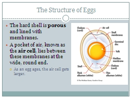 The Structure of Eggs PowerPoint PPT Presentation