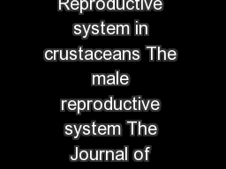 Introduction Reproductive system in crustaceans The male reproductive system The Journal of Experimental Biology