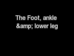 The Foot, ankle & lower leg
