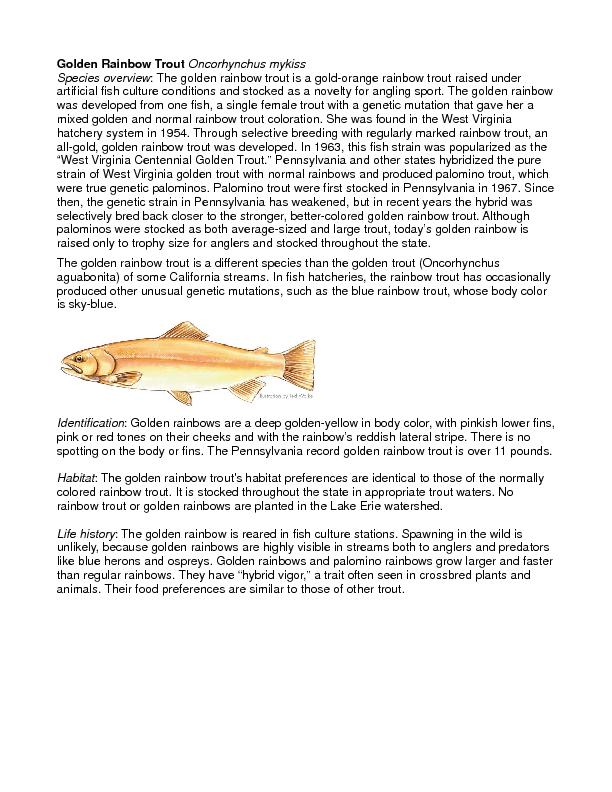 Golden Rainbow TroutOncorhynchus mykissSpecies overview: The golden ra