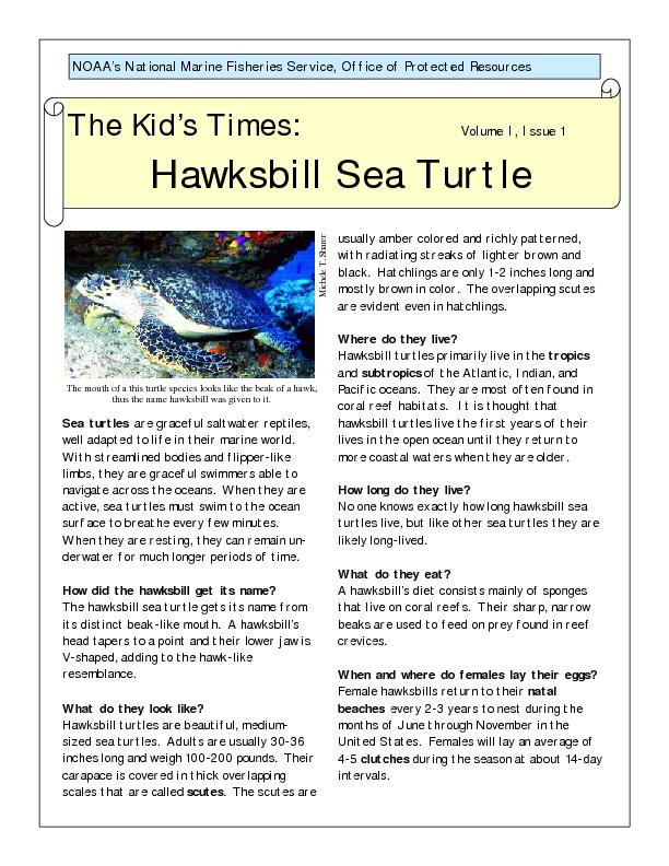 Sea turtles are graceful saltwater reptiles, well adapted to life in t