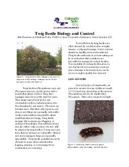 1.  Twig beetles often damage only part of a