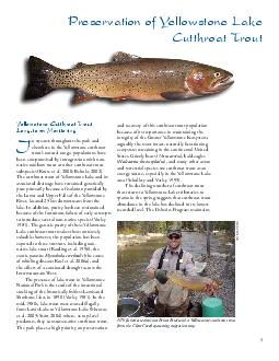 n streams throughout the park and elsewhere in the Yellowstone cutthroat trouts natural range populations have been compromised by introgression with non native rainbow trout or other cutthroat trout