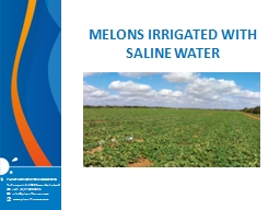 MELONS IRRIGATED WITH SALINE WATER