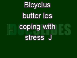 Bicyclus butter ies coping with stress  J