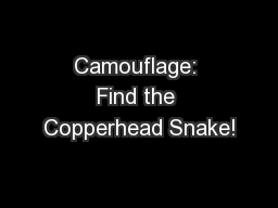 Camouflage: Find the Copperhead Snake!