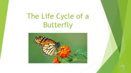 The Life Cycle of a Butterfly PowerPoint PPT Presentation