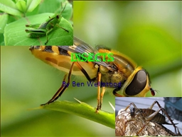 INSECTS PowerPoint Presentation, PPT - DocSlides