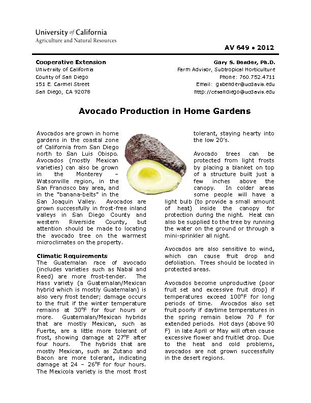 Avocados are grown in home gardens in the coastal zone of California f
