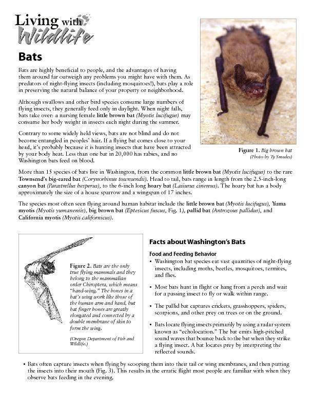Bats are highly beneficial to people, and the advantages of having  ..