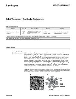 MAN Revised November MP  Qdot Secondary Antibody Conjugates Table  Contents and storage Material Amount Concentration Storage Stability Qdot secondary antibody conjugate  L or  L  M solution in  M be PowerPoint PPT Presentation