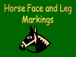 Horse Face and Leg PowerPoint PPT Presentation