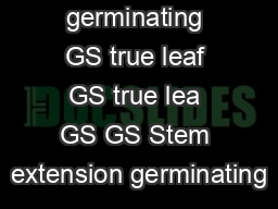 germinating GS true leaf GS true lea GS GS Stem extension germinating