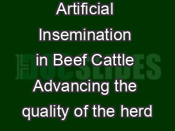 Artificial Insemination in Beef Cattle Advancing the quality of the herd