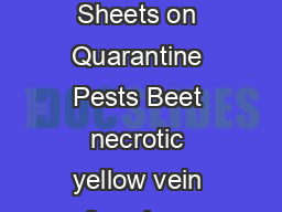 PPO quar ntine pest Pr epar ed by CABI and E PPO for the E under Contr act  Data Sheets on Quarantine Pests Beet necrotic yellow vein furovirus IDENTITY Name  Beet necrotic yellow vein furovirus Taxo
