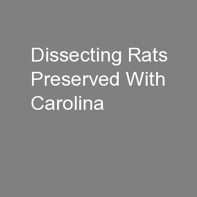 Dissecting Rats Preserved With Carolina