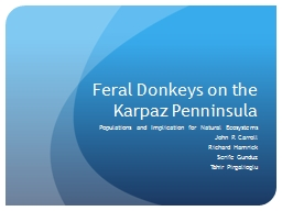 Feral Donkeys on the Karpaz Penninsula