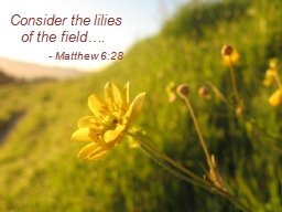 Consider the lilies