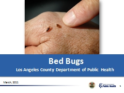 1 Bed Bugs